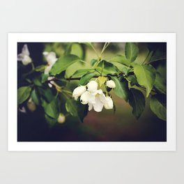 spring blossom. Art Print