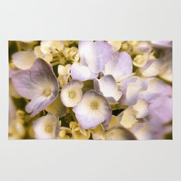 Delicate and Soft - Hydrangea flowers in lavender  Rug