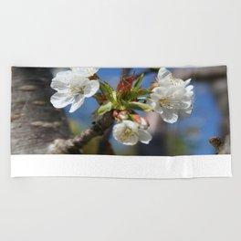 Cherry Blossom In Spring Sunlight Beach Towel