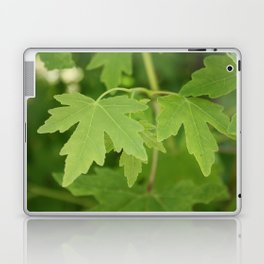 Amber Orientalis Leaves Laptop & iPad Skin