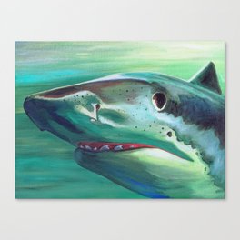Tiger Shark Portrait Canvas Print