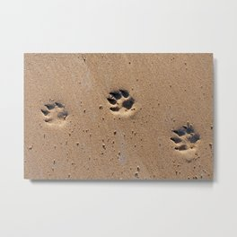 Dog paw prints on a sandy beach Metal Print