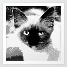 holy birma cat blue eyes vector art black white Art Print