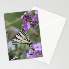 Scarce Swallowtail Butterfly on Pink Flowers Stationery Cards