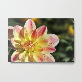 Dahlia Droplets Metal Print