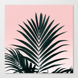 Tropical Green palm tree leaf blush pink gradient photography Canvas Print