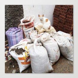 Cat on sacks Canvas Print