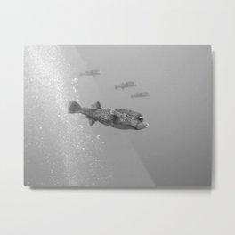 Pufferfish team Metal Print