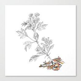 Agrion Canvas Print
