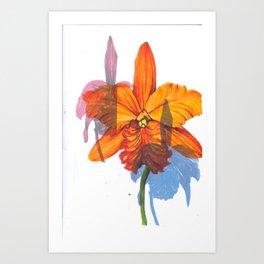 Orchids. Art Print