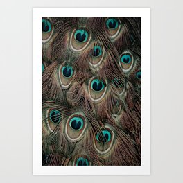Peacock feathers abstract Art Print