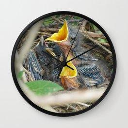 Baby Mockingbirds Wall Clock