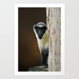 Diana Monkey Art Print
