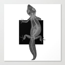 Gecko Skeleton Canvas Print