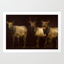 Three Elk Art Print