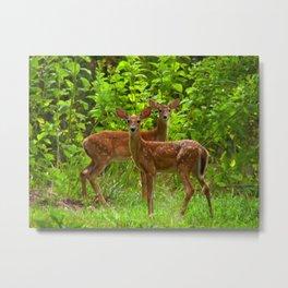 fawns II Metal Print