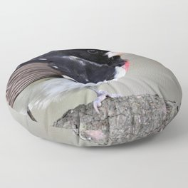 A Touch of Class: Rose-Breasted Grosbeak Floor Pillow