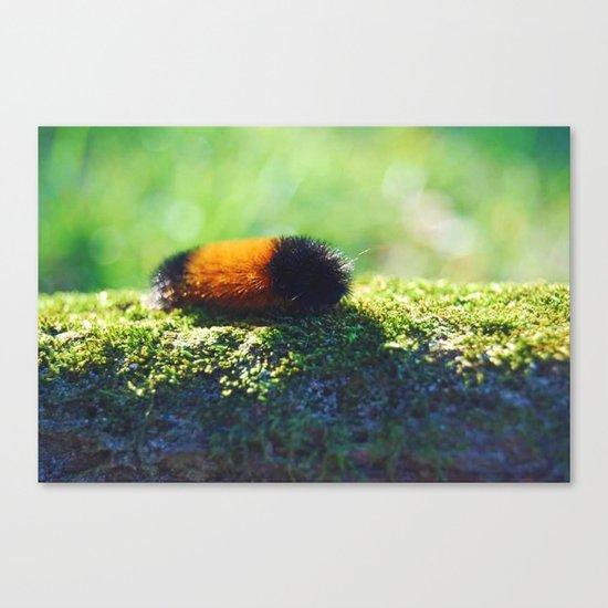 Caterpillar 2 Canvas Print