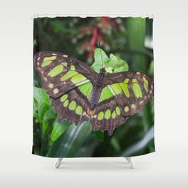 Siproeta stelenes Shower Curtain