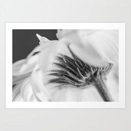 daisy - vanilla ice Art Print