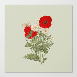 A country garden flower bouquet -poppies and daisies Canvas Print