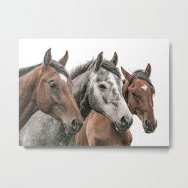 Three Horses, Horse Wall Art Metal Print