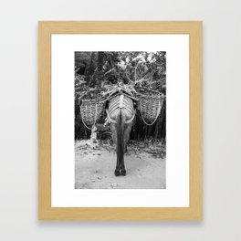 Donkey's Behind Framed Art Print