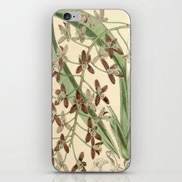 Cymbidium canaliculatum iPhone Skin