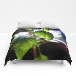 Sunlit Serrano Comforters