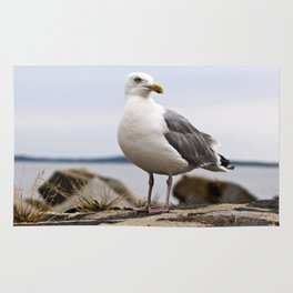 Beautiful Seagull of the Baltic Rug