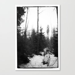 NORWEGIAN FOREST X Canvas Print