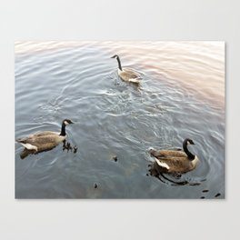 Geese in a Pond Canvas Print