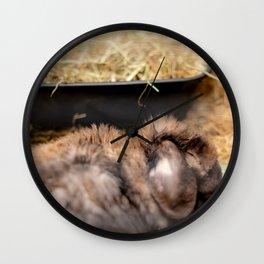 Cute lop eared rabbit sleeping Wall Clock