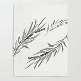 Eucalyptus leaves black and white Poster