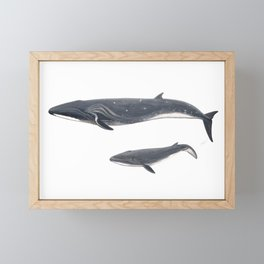 Sei whale (Balaenoptera borealis) Framed Mini Art Print