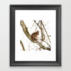Little Friend On The Branch  Framed Art Print
