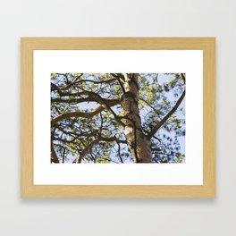 find a woodpecker Framed Art Print