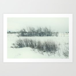 cold field Art Print