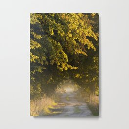 Alley of lime trees in Autumn #2 Metal Print