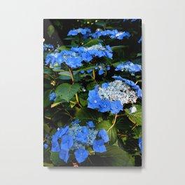 Pretty Blue Hydrangeas Metal Print