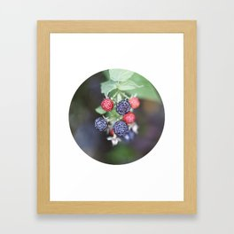 black berry Framed Art Print