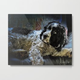 Hunter The Sprocker Metal Print