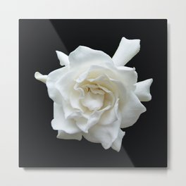 Gardenia on Black DPG150524 Metal Print
