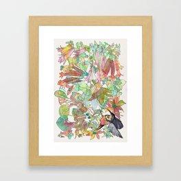 Eastern Spinebill Honeyeater Framed Art Print