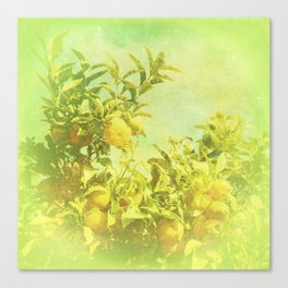 Mandarine Tree Canvas Print