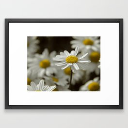 Daisy Daze Framed Art Print