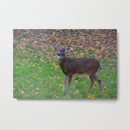 Curiosity of Youth Metal Print