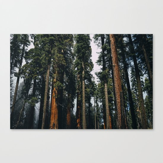 Woods #fog Canvas Print