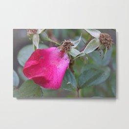 One Pink Petal Metal Print