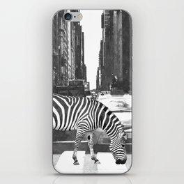 Black and White Zebra in NYC iPhone Skin
